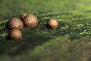 Golden pearls II by AlejandroCastillo