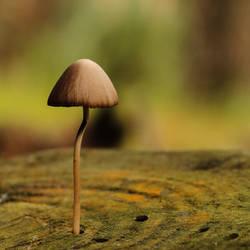 Autumn mushroom II by AlejandroCastillo
