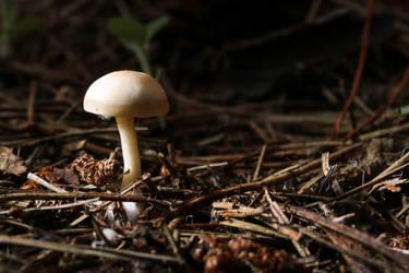 Autumn mushroom III by AlejandroCastillo