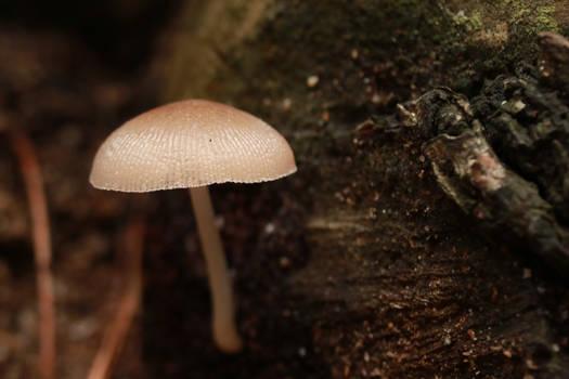 January fungi I