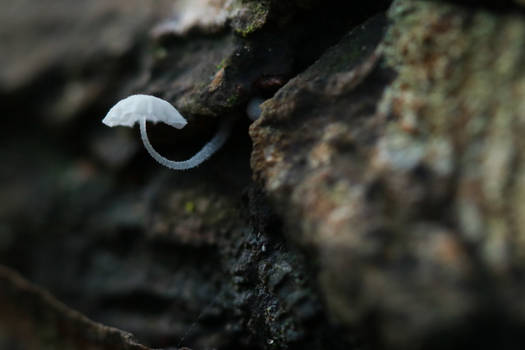 January fungi II