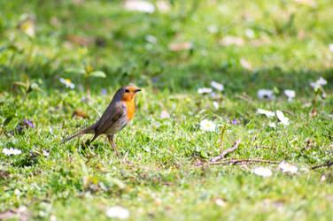 Curious Bird by Lavareille