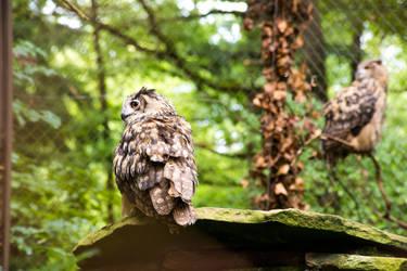 Owl - 2 by Lavareille