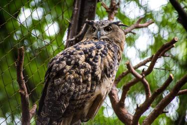Owl - 3 by Lavareille