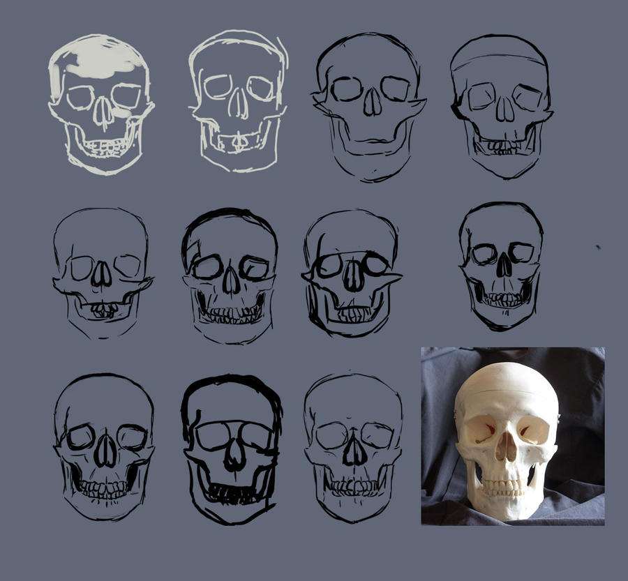 [Image: skull_study_by_wolkenfels-d53h73i.jpg]