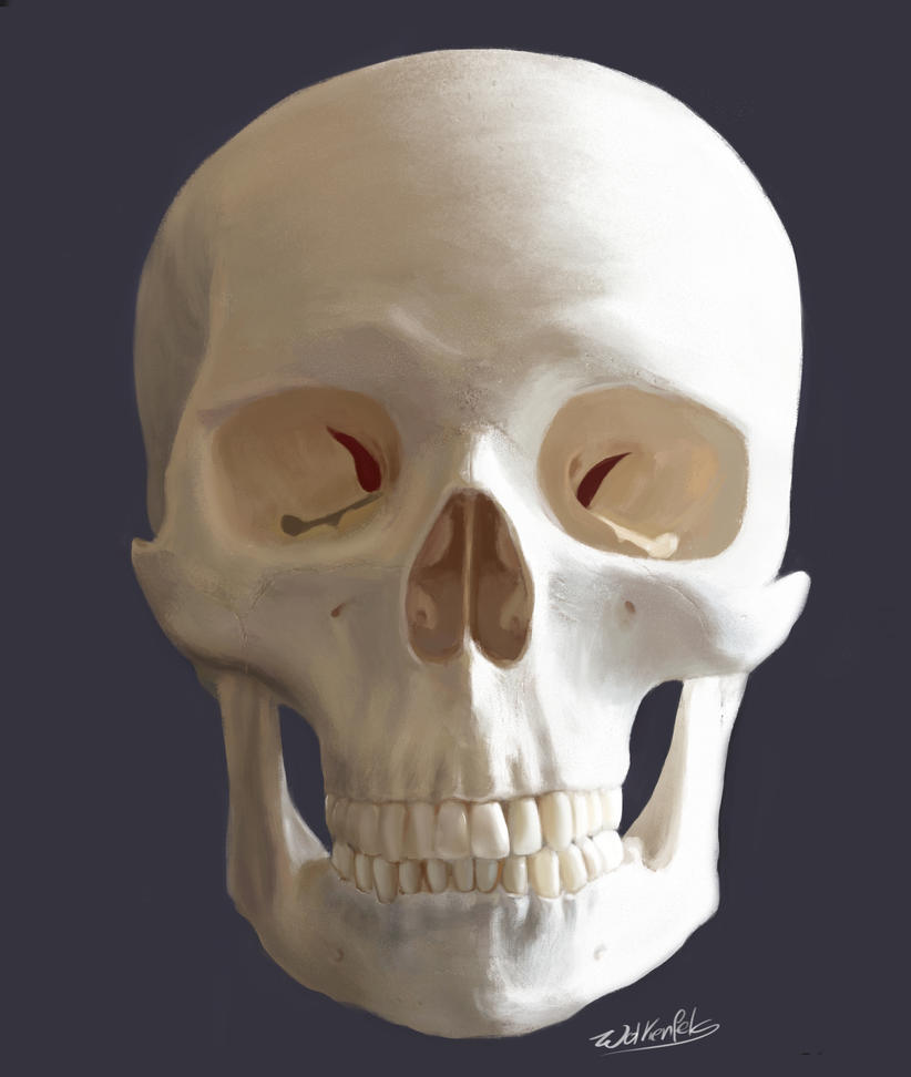 [Image: skull_frontal_study_by_wolkenfels-d60vx7r.jpg]