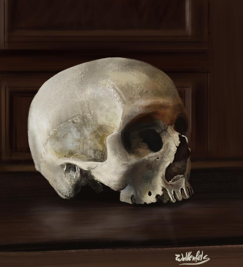 [Image: still_life_study_skull_by_wolkenfels-d62h929.jpg]