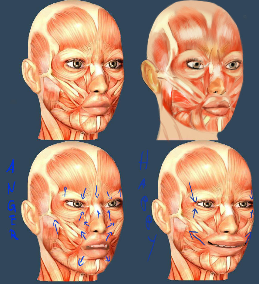 [Image: facial_muscles_by_wolkenfels-d62ifvt.jpg]