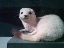 snowopossum by SherlolIy