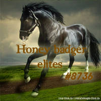 Honey badger elites savi