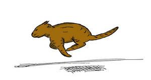 Run, cat, run! by ulaulaman