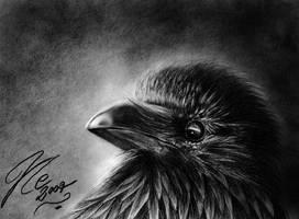 Corvus Corax by Haliestra
