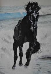 Cavallo sul mare.jpg by Viorel83