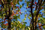 Autumn is here by DesignByKai