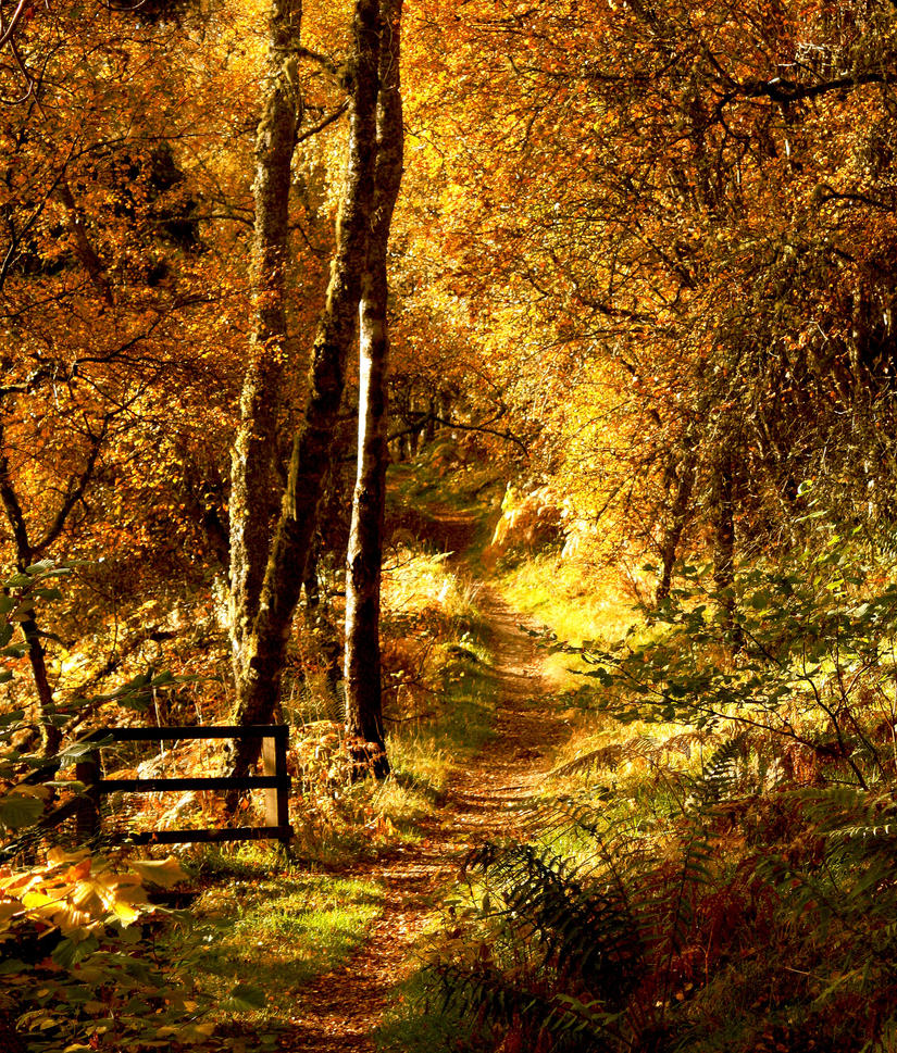 Autumn Walk by mpphotographics