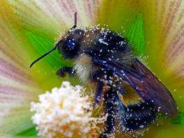 A bee by Mackingster