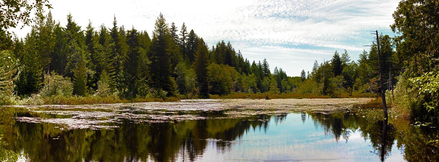 Marsh Pan by Mackingster