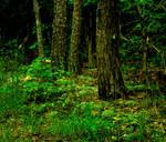 Dark Forest by Missvirginia