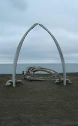 Celebration bones by Arctic-Stock