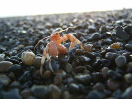 Camera killing crab by Arctic-Stock