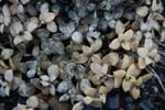 Texture - fall plants