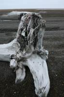 Beach wood stump by Arctic-Stock