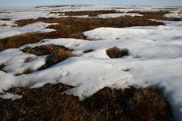 Spring time tundra
