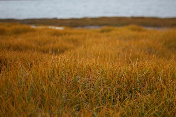 Orange tundra....