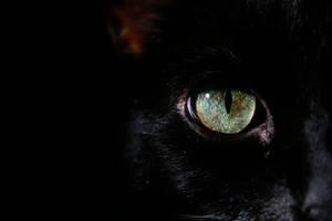 dark feline ....two
