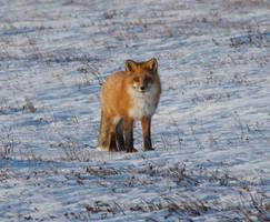 Foxy Moxy...#1