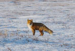 Foxy Moxy...#2