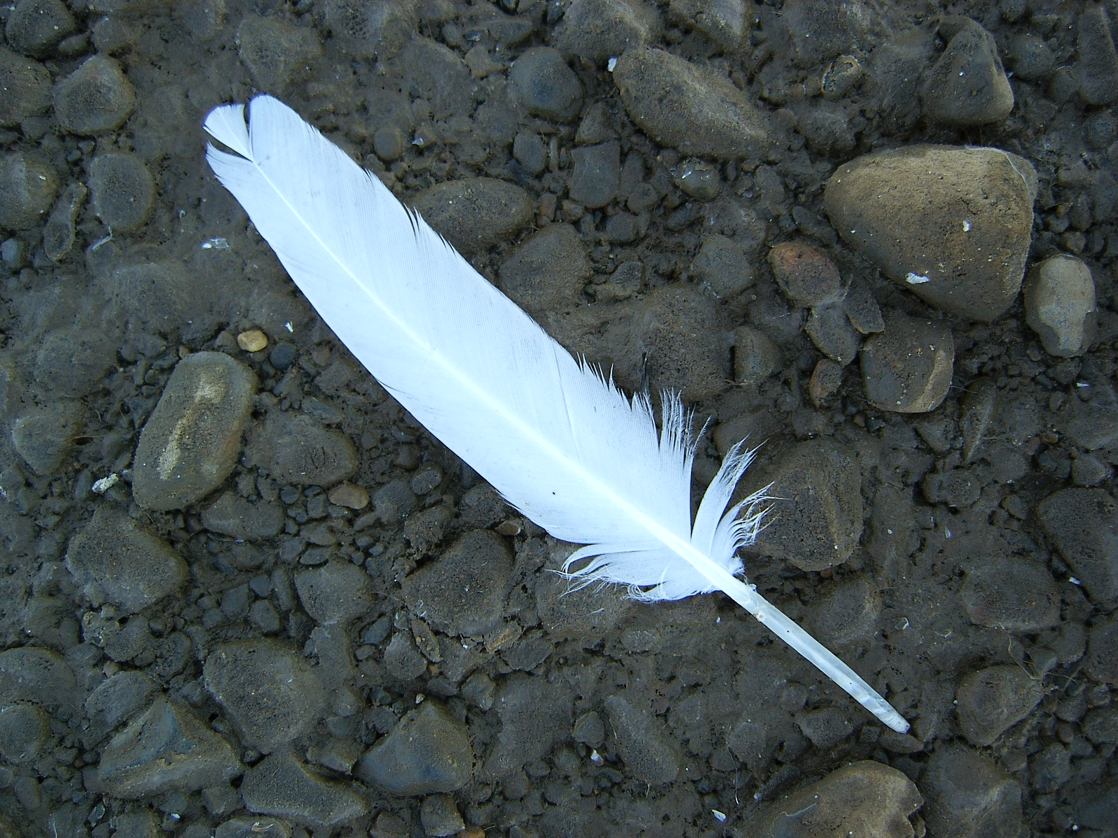 single white feather by Arctic-Stock