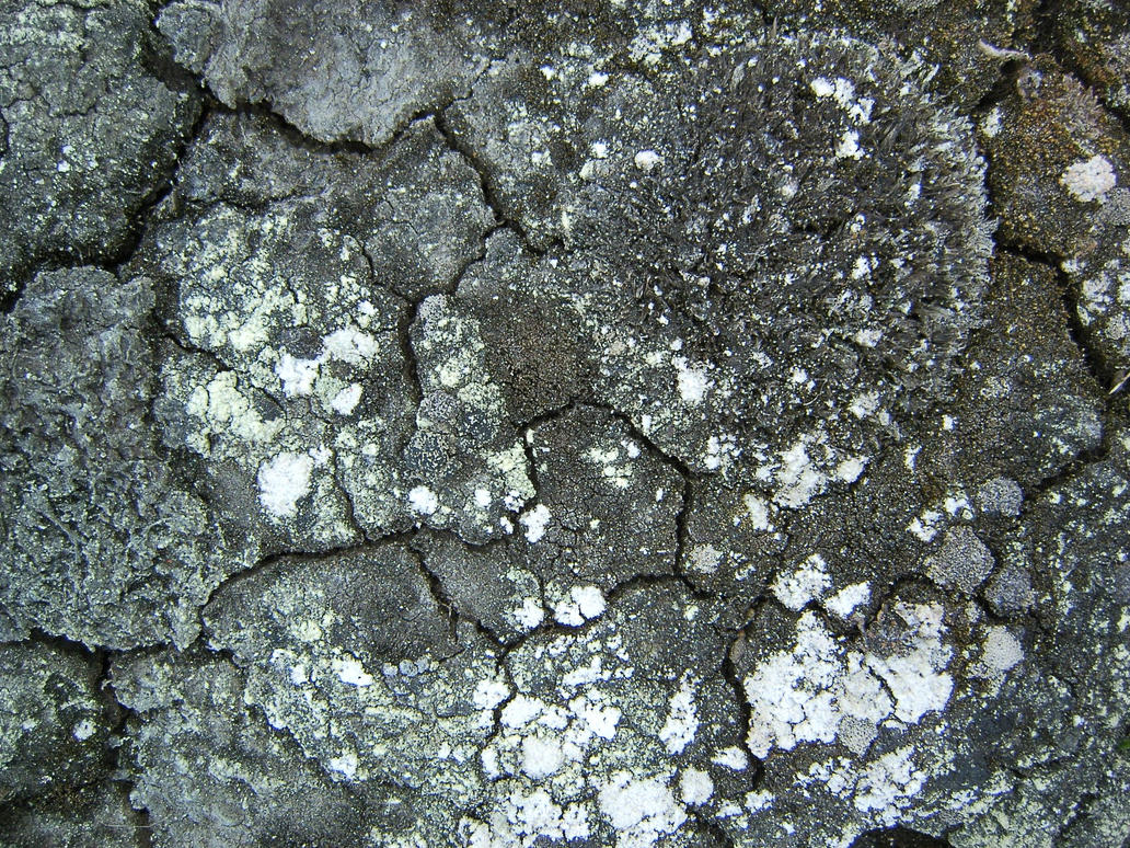 cracked mud texture by Arctic-Stock