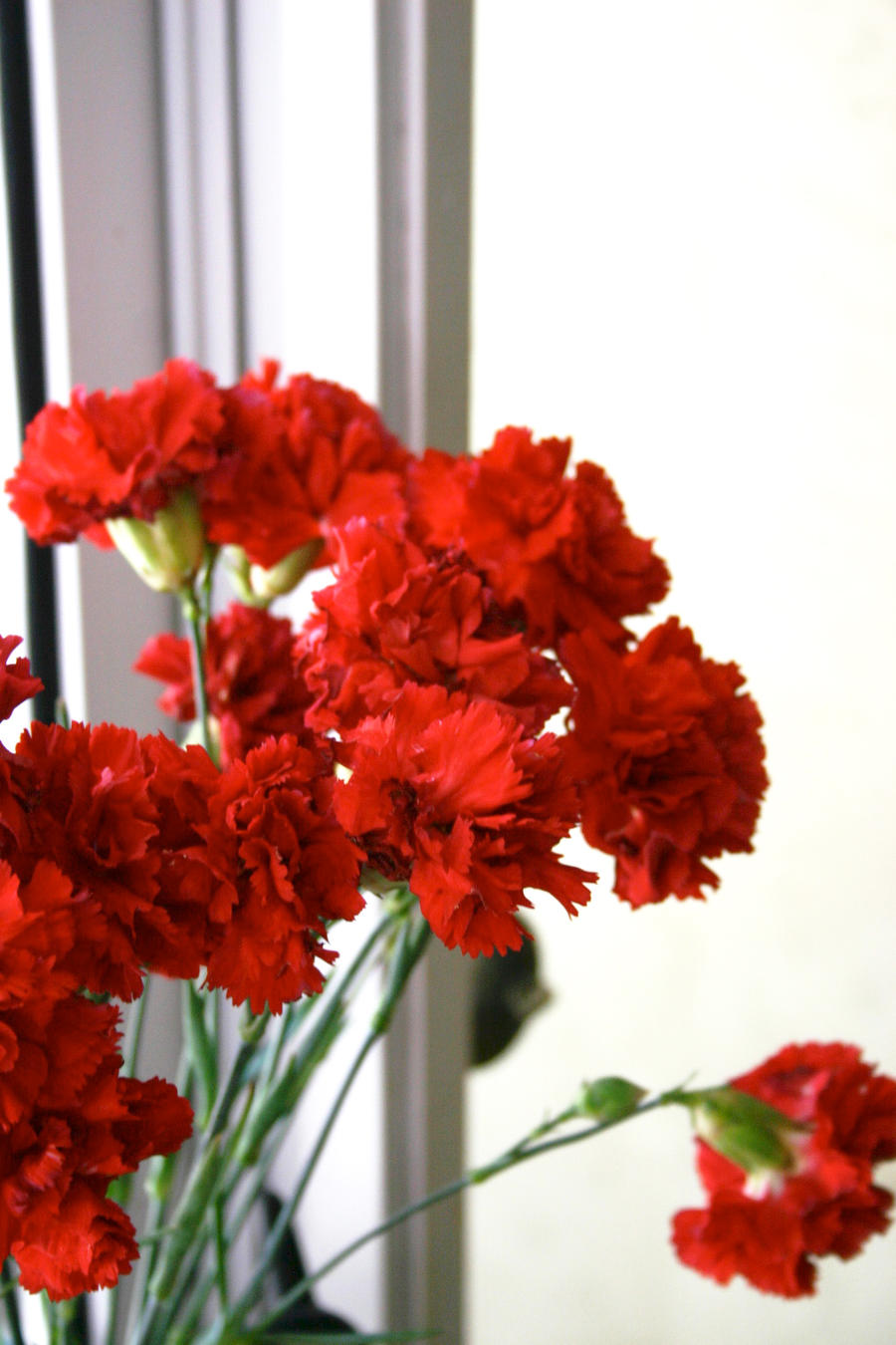 Carnations by ThatsByronic