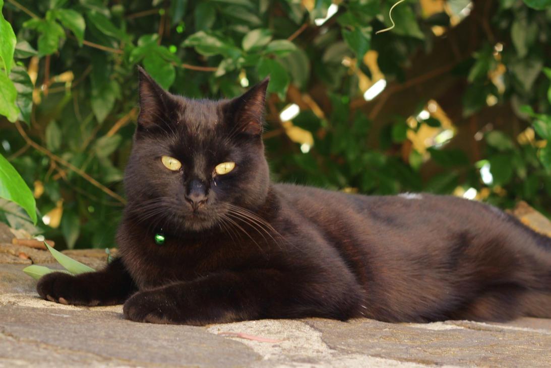 Ebony Cat 64