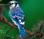 Blue Bird + video