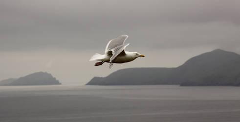 Slea Head and Seagull by fairydust76