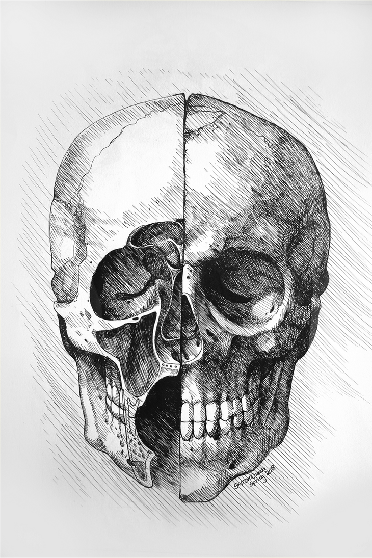 Leonardo Da Vinci - Skull Study by skyrore1999