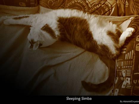 Sleeping Simba