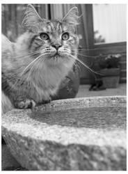 Water cat by AlatarielCiryatan