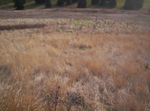 River Valley Grasses