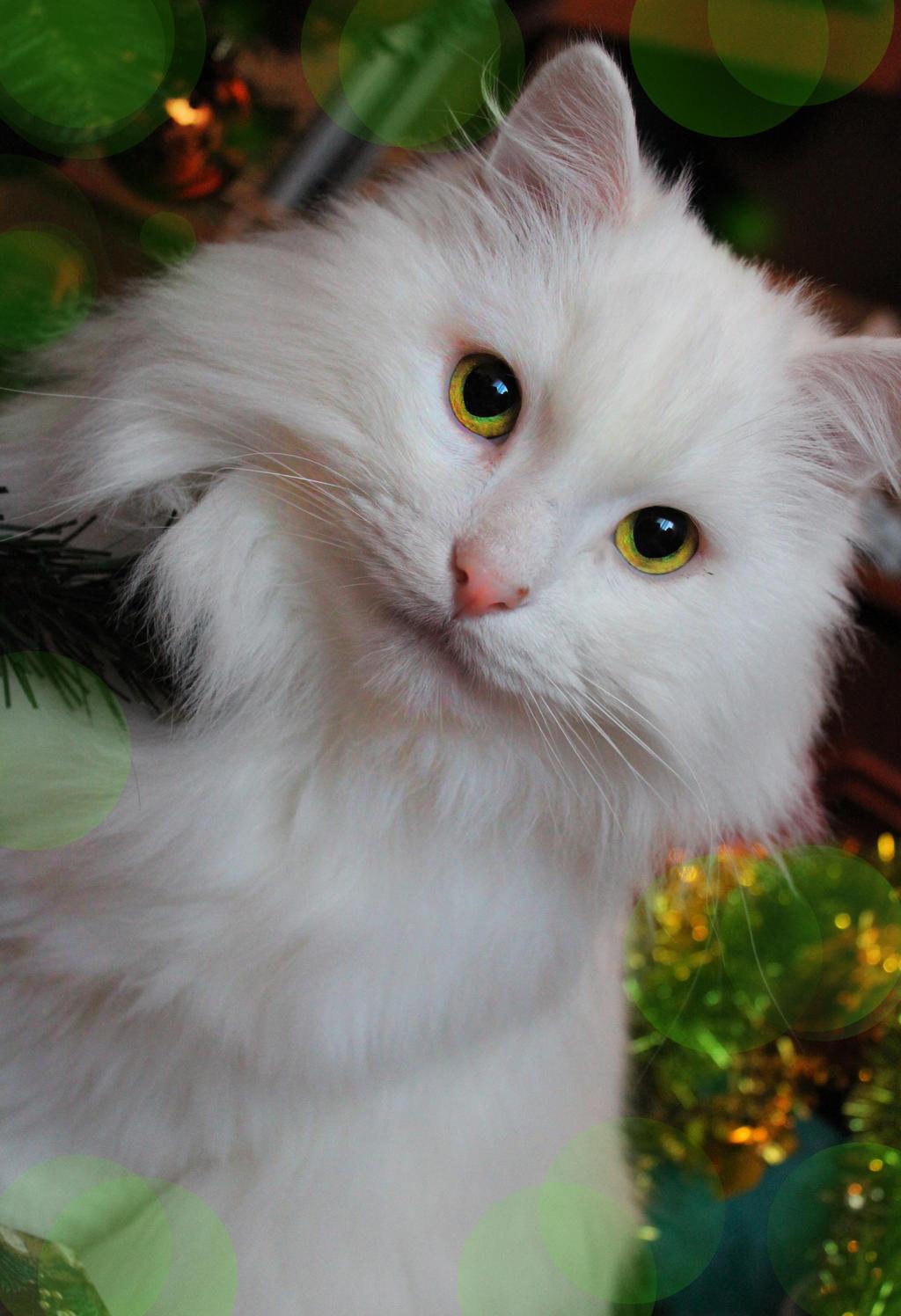 Alex the cat my dearest friend. R.I.P. by MonotoneInkwell