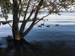 High Water Lake Ontario