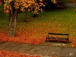 autumn in the park by shokisan