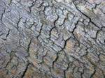 cracked wood 2
