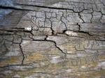cracked wood 5