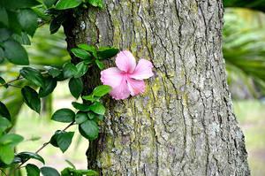 Flower by Jessfburdie