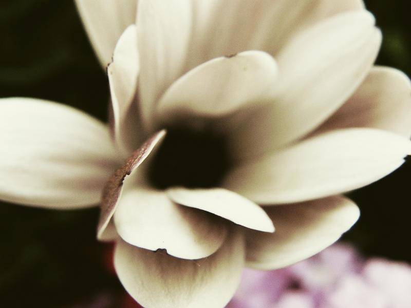 Bloom by Trollbraut