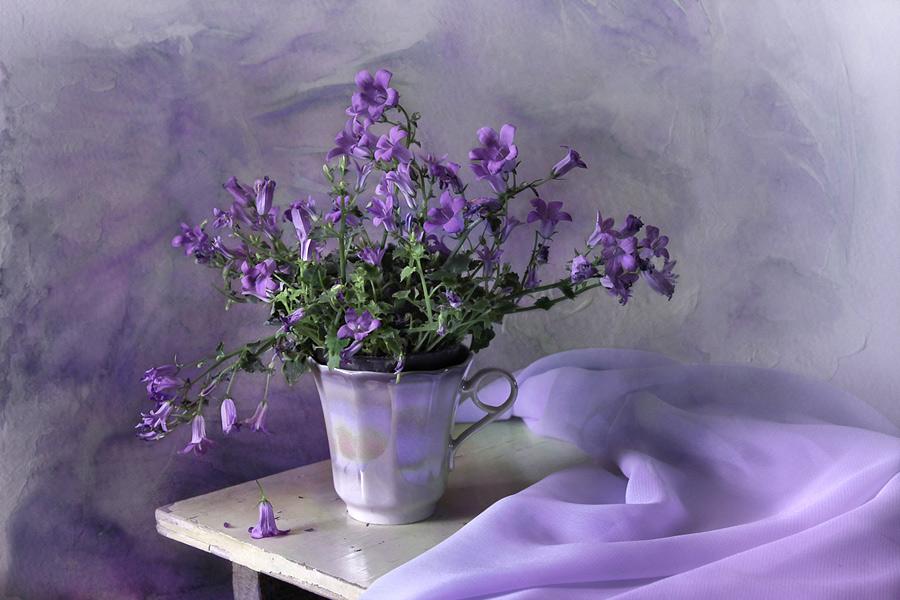 Campanulae of spring by An-gora