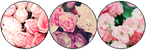 f2u pink flowers page deco by S-trawBerrieLicious